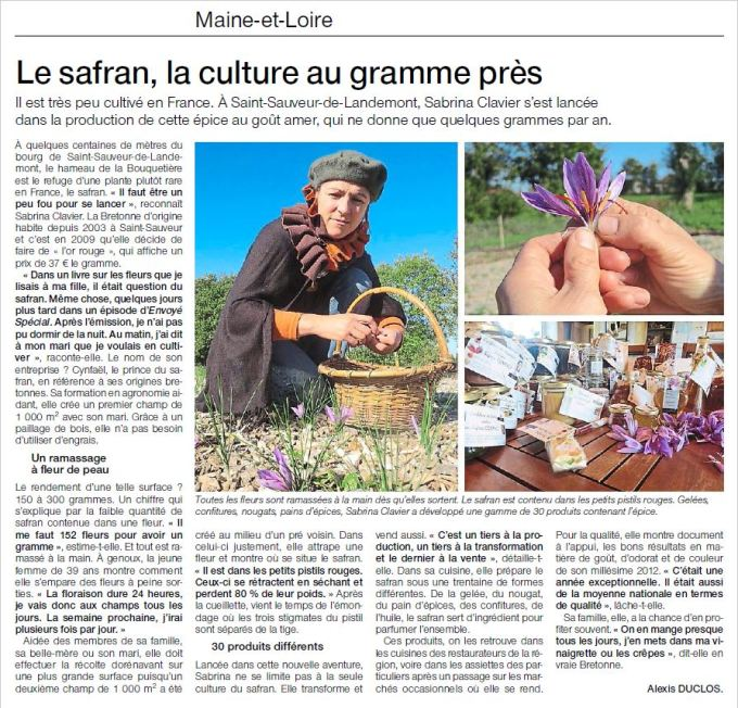 Le safran, la culture au gramme près